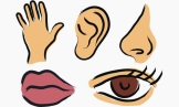 The Five Known Senses